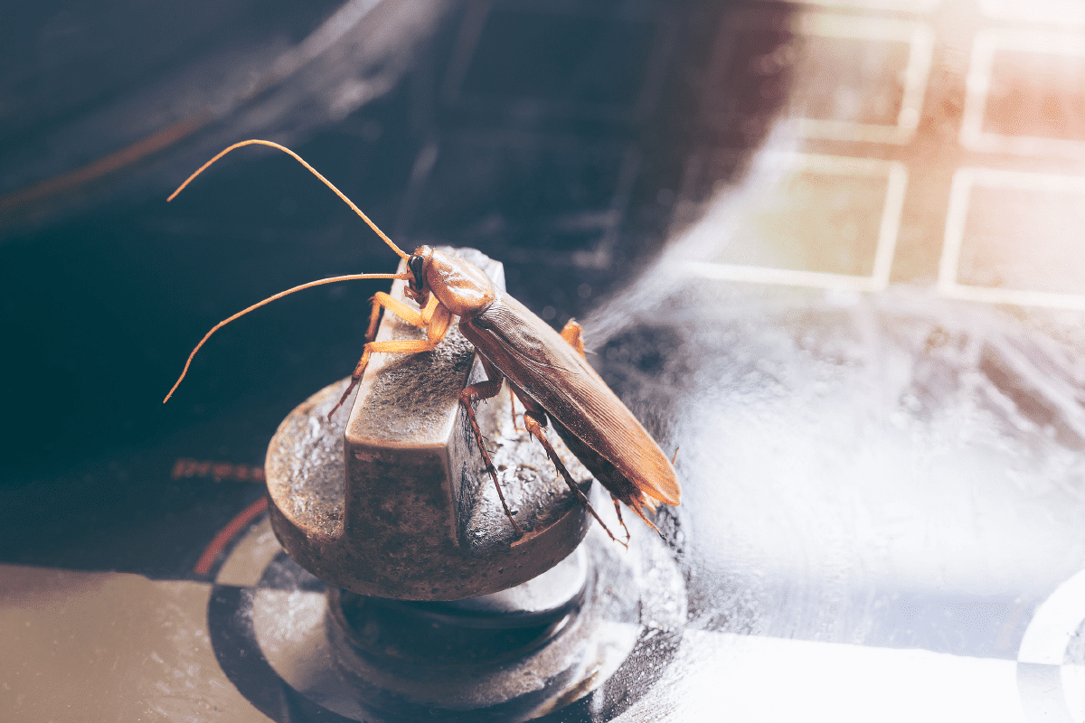 Palmetto Bug vs. Cockroach: 5 Differences to Know